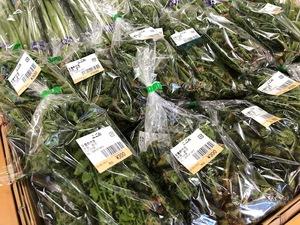 春の山菜のこごみが入荷しています。