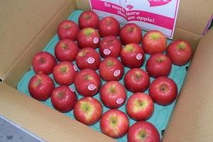 ▲贈答用リンゴ