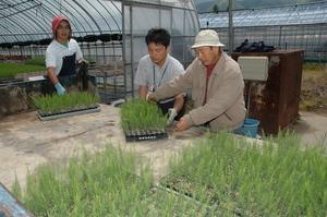 アスパラガスの栽培面積拡大を目指して