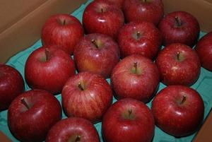 安曇野産りんご「サンふじ」のネット販売の終了について