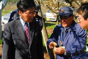 小倉地区のナシ畑で営農指導員から被害状況を聞く務台俊介衆院議員(左)