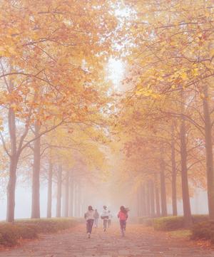 ≪金 賞≫  『朝霧の中へ』  深沢 有基 様