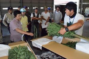 ▲荷造りについて説明するJA営農指導員�