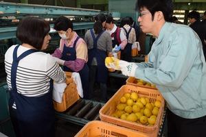 ▲JA広島ゆたかの職員�にレモンの選別について確認する選果員