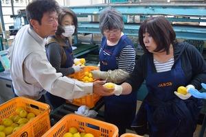 ▲JA広島ゆたかの山根和貴部長�に規格について確認する選果員