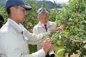 ▲被害のあったリンゴ畑でJA営農指導員から状況を聞く千國組合長