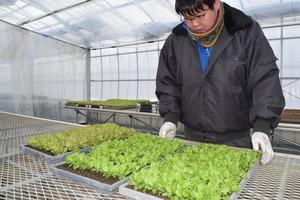 ▲苗の生育状況を確認する営農指導員