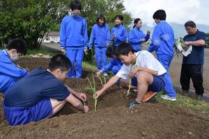 ▲苗を植える生徒
