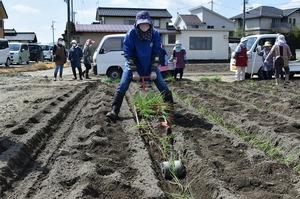 ▲簡易定植機「ひっぱりくん」で苗を植える部員