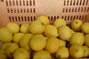 ▲広島県産レモン
