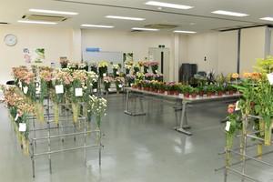 ▲広域営農センターで初めて開催した花き品評会